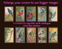 Cigarette card tobacco card set FEATHERED FRIENDS birds